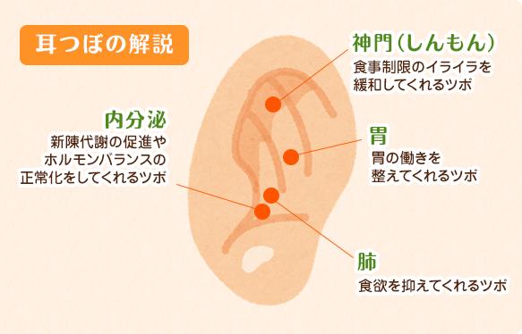 耳ツボの解説